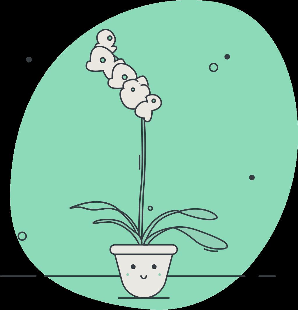Todays flower
